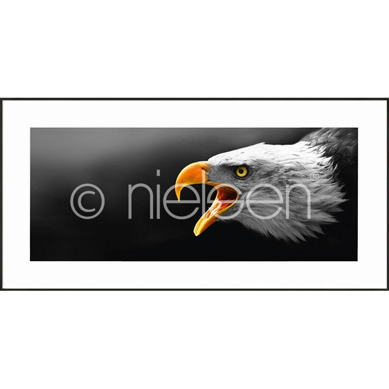 "Inramad bild ""Eagle"" med aluminiumram C2"