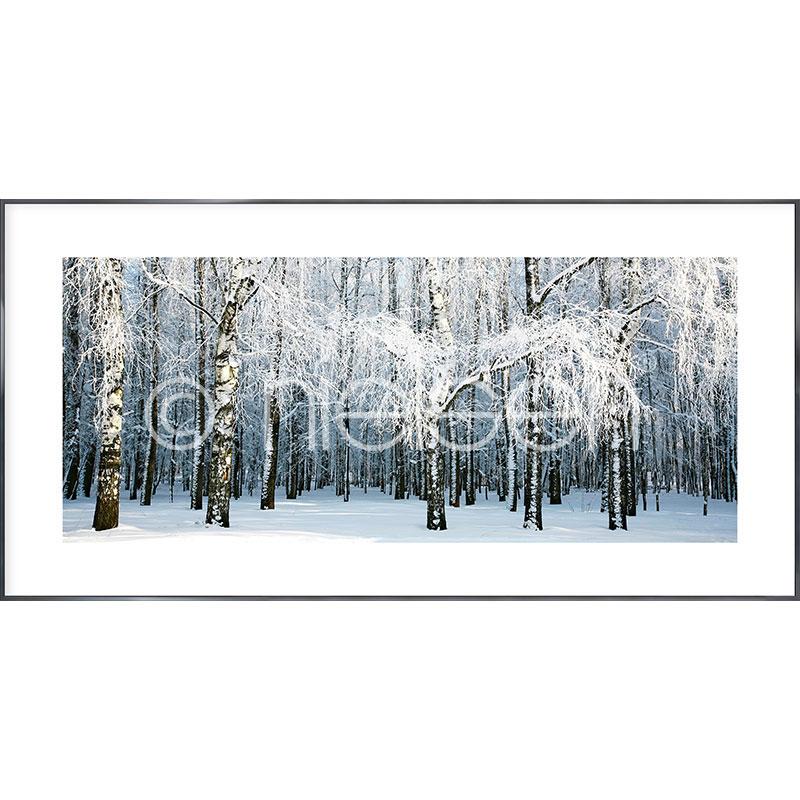 """Inramad bild """"Birch Forest Snow"""" med aluminiumram Alpha"""