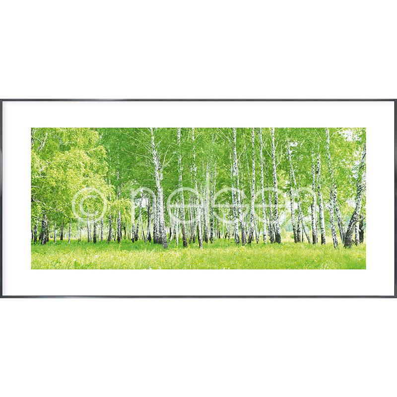 """Inramad bild """"Birch Forest"""" med aluminiumram Alpha"""