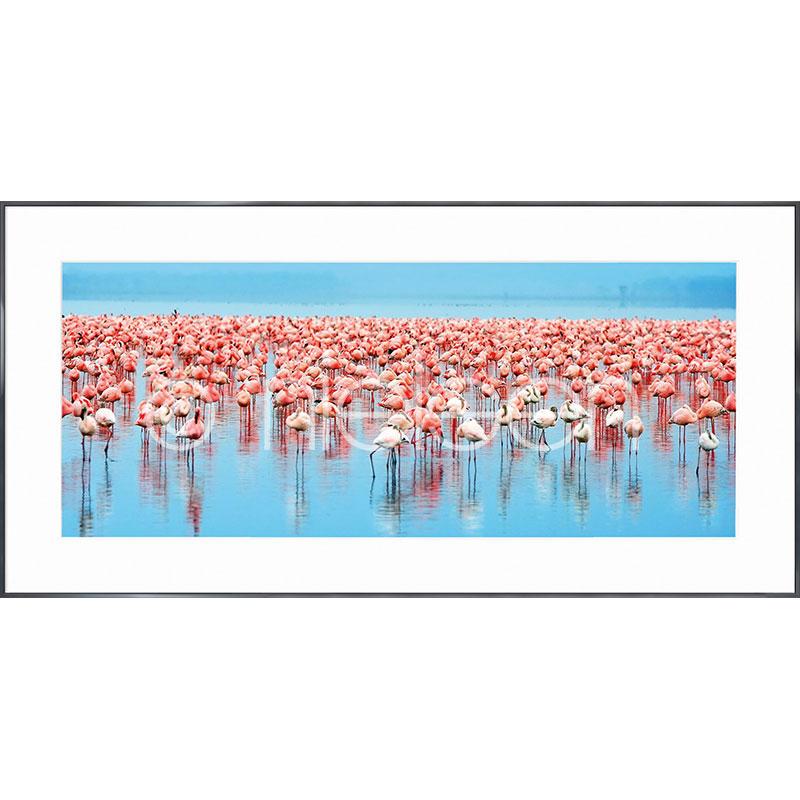 """Inramad bild """"Flamingos"""" med aluminiumram Alpha"""