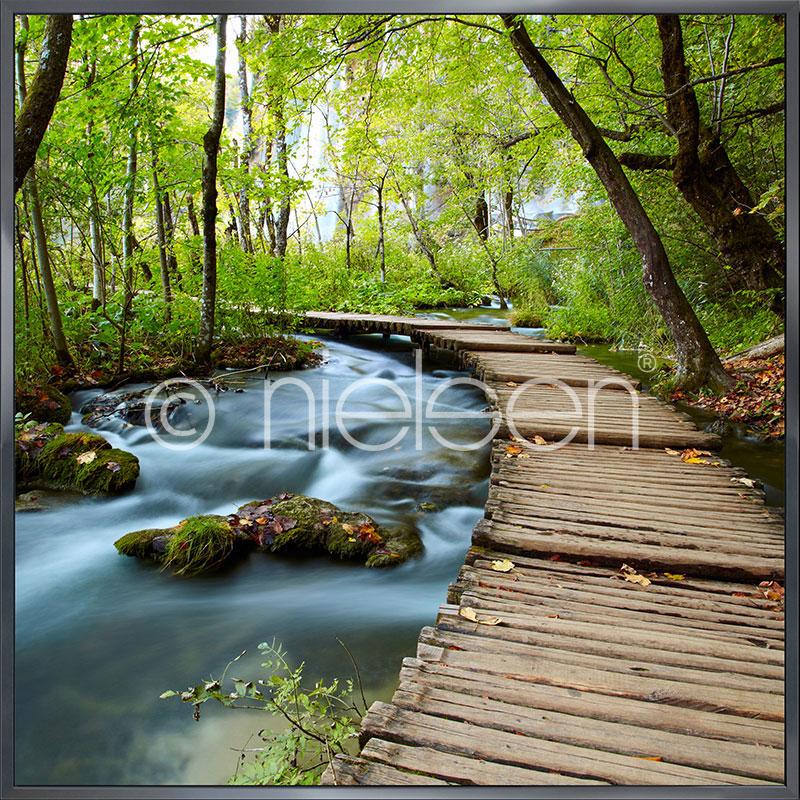 """Inramad bild """"Footprint Forest"""" med aluminiumram Alpha"""