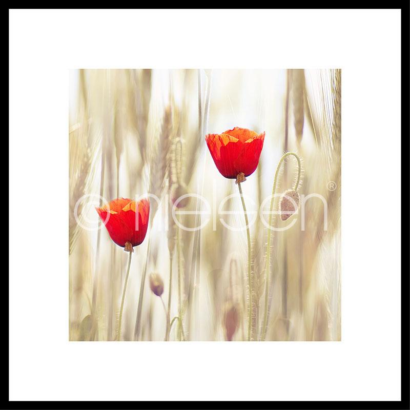 """Inramad bild """"Flower Cornfield"""" med aluminiumram C2"""