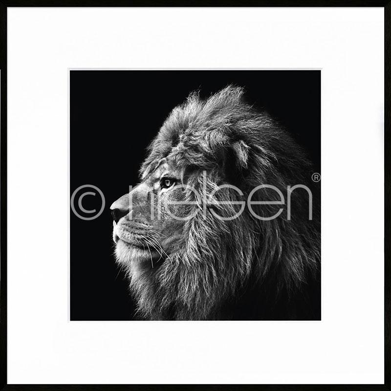 "Inramad bild ""Lion black and white"" med aluminiumram C2"
