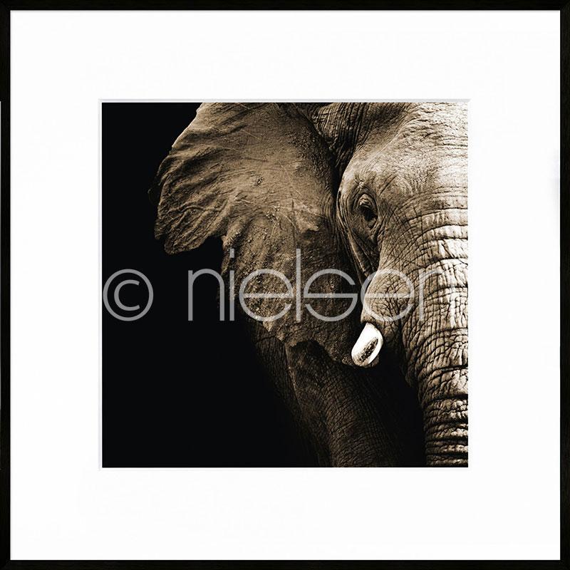 "Inramad bild ""Elephant"" med aluminiumram C2"