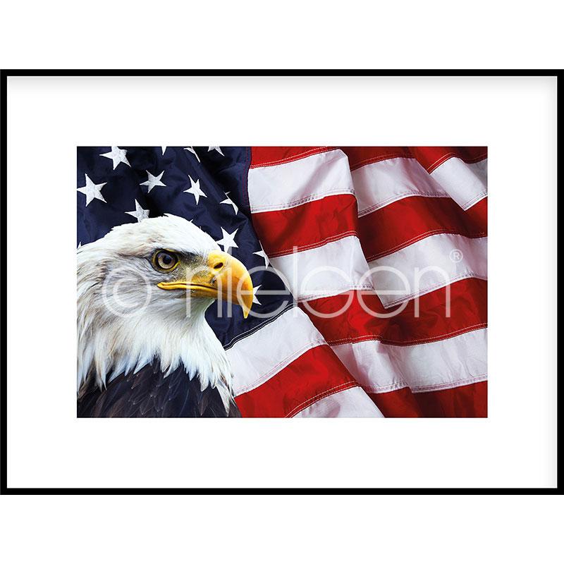 "Inramad bild ""Eagle USA"" med aluminiumram C2"