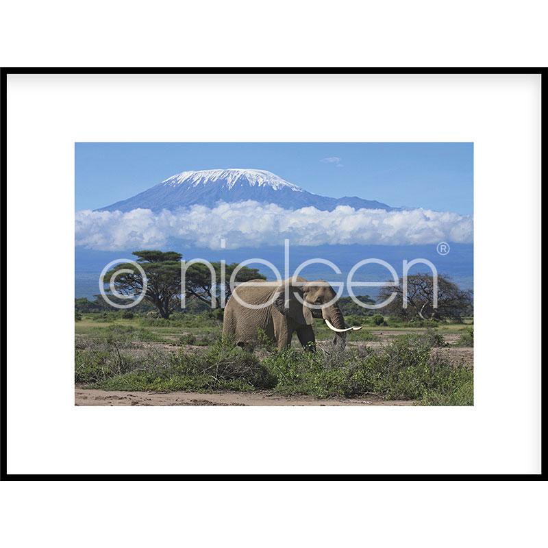 "Inramad bild ""Elephant Prairie"" med aluminiumram C2"