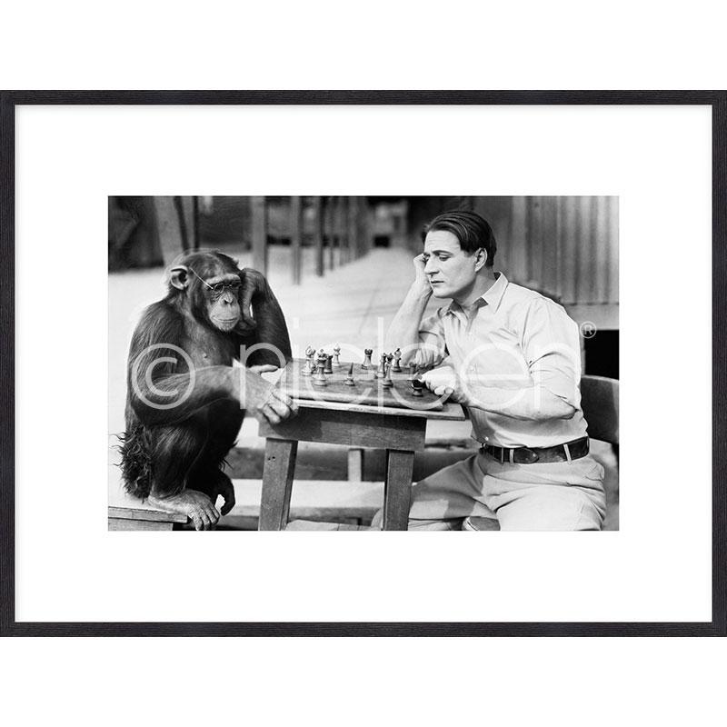"Inramad bild ""Monkey chess"" med träram Quadrum"