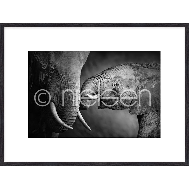 "Inramad bild ""Elephant Baby"" med träram Quadrum"