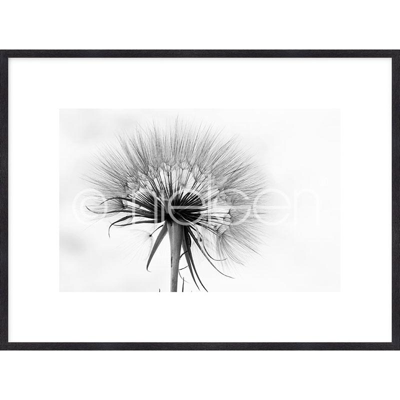 "Inramad bild ""Dandelion abstract"" med träram Quadrum"