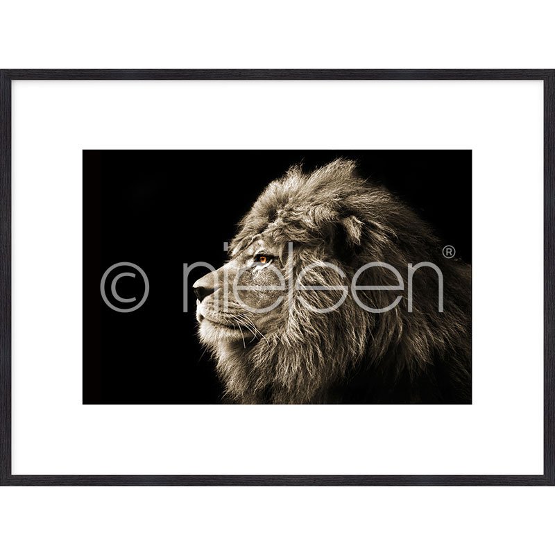 "Inramad bild ""Lion black and white"" med träram Quadrum"