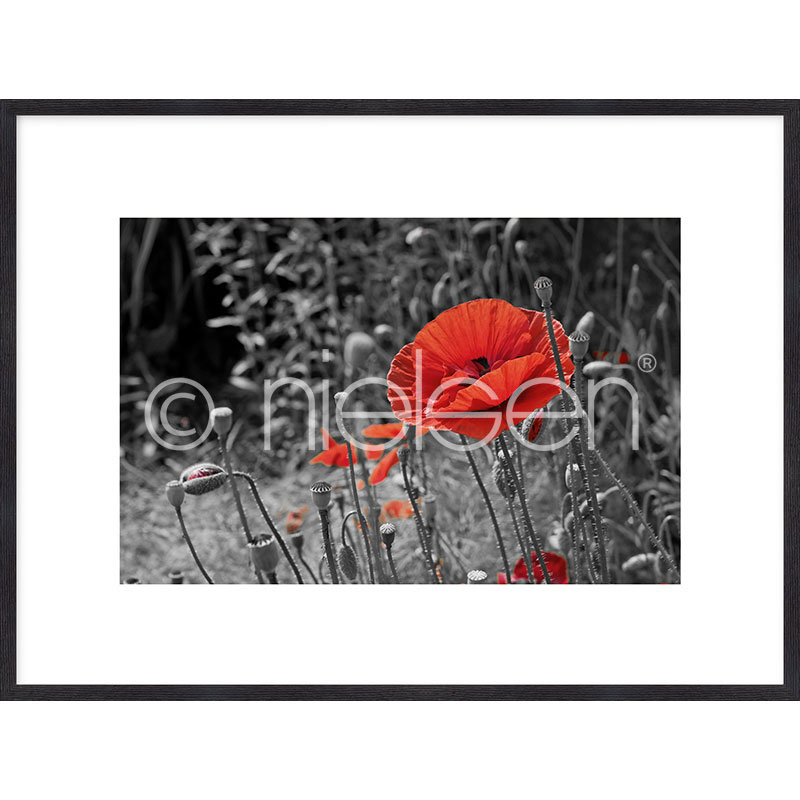 "Inramad bild ""Red Poppy Flower"" med träram Quadrum"