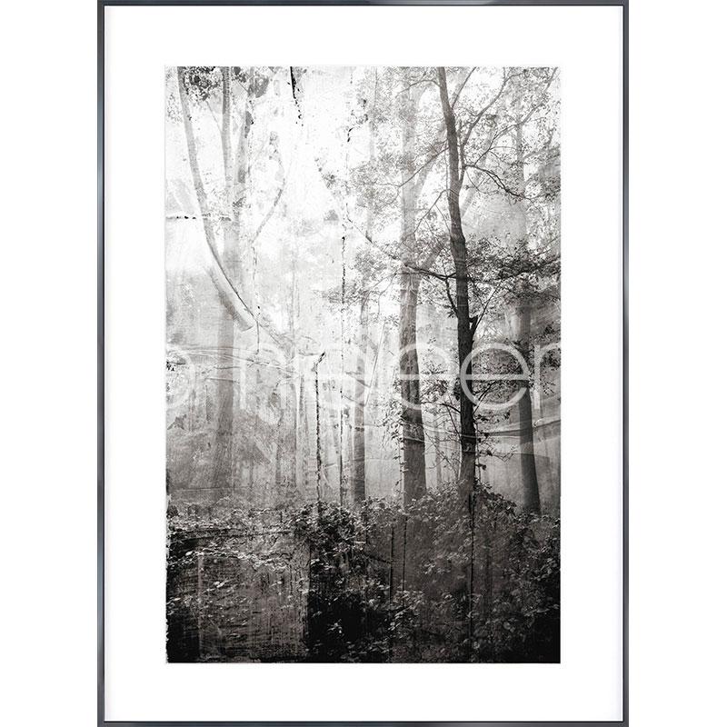 "Inramad bild ""Forest Black and White"" med aluminiumram Alpha"