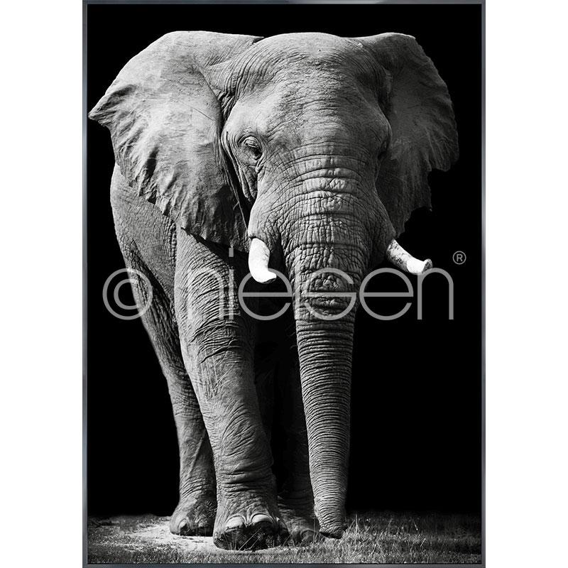 "Inramad bild ""Elephant black and white"" med aluminiumram Alpha"