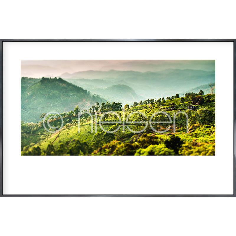 """Inramad bild """"Landscape of Tea Plantations"""" med aluminiumram Alpha"""