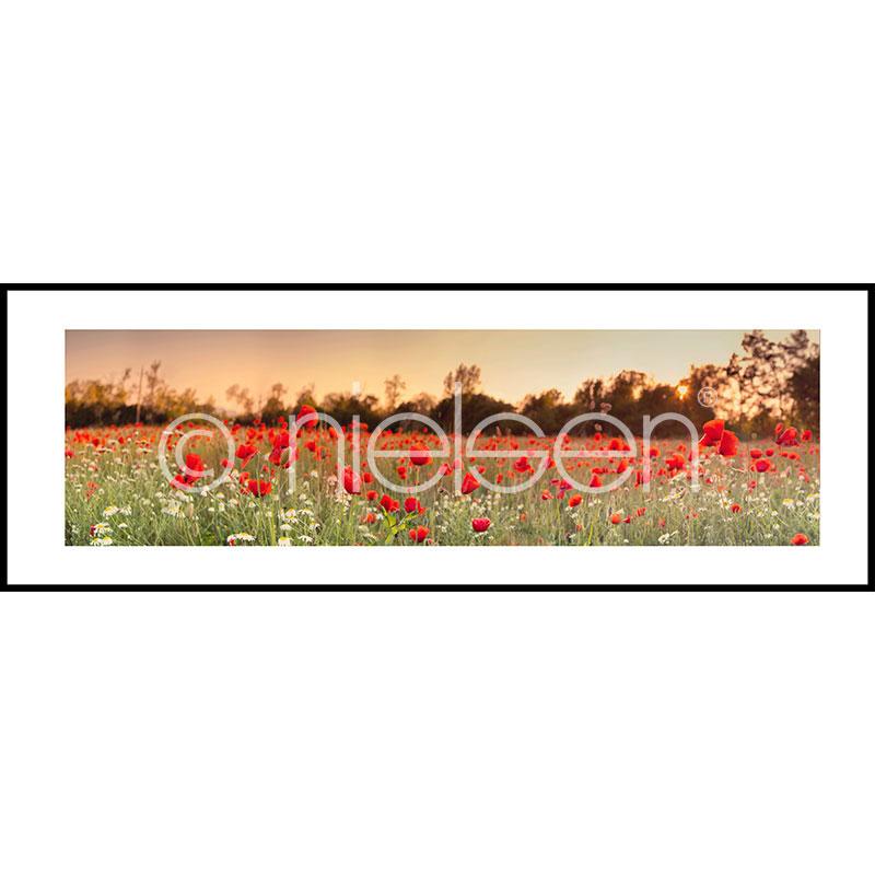 """Inramad bild """"Poppy Flower Field"""" med aluminiumram C2"""