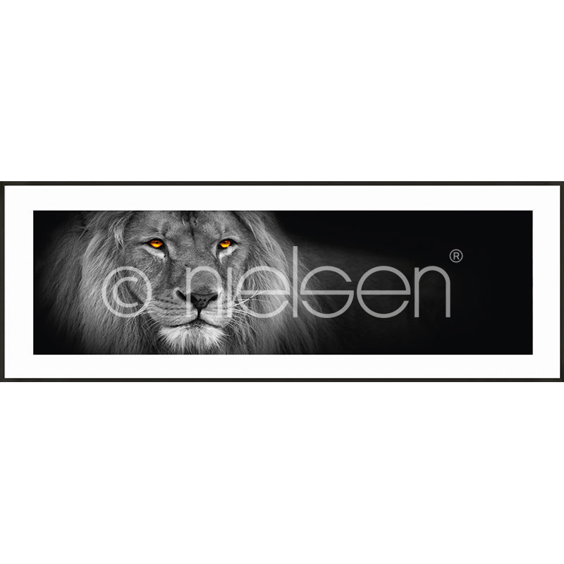 "Inramad bild ""Lion black and white"" med aluminiumram C2"